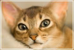 Mi gato se lame en exceso ¿Tendrá un problema de salud?