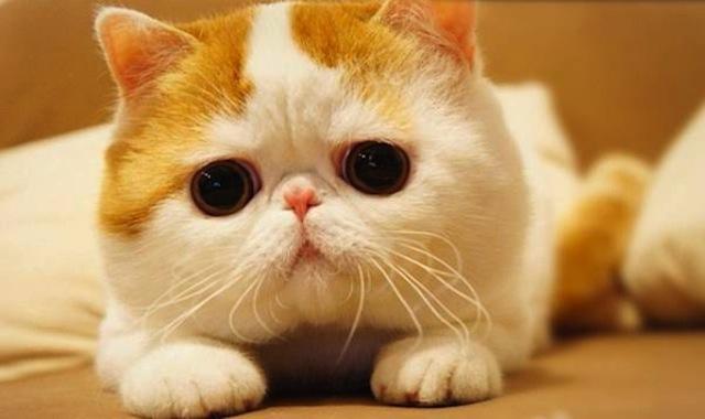 Gatos famosos - Snoopy Babe