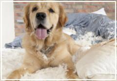 Las 5 venganzas de un perro