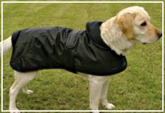 La utilidad de los vestidos para perros