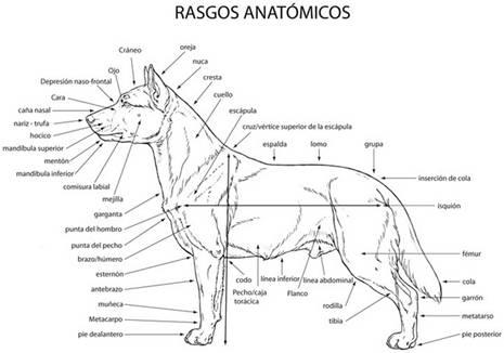 Diccionario Canino - Letra A - Mi Perro Es Único