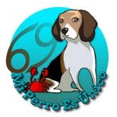 Horóscopo de perros 2016 - Signo Cáncer