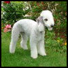 Bedlington Terrier - Razas de Perros