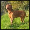 Dogo Burdeos - Razas de Perros