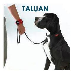 Taulan