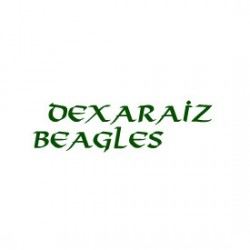 Beagles DeXaraiz