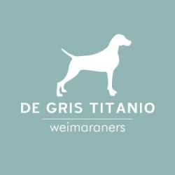 De Gris Titanio Weimaraners