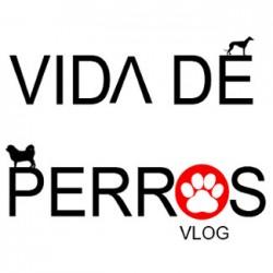 Vida de perros VLOG - Fotógrafo de perros