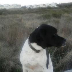 Peluguau - Peluquería canina