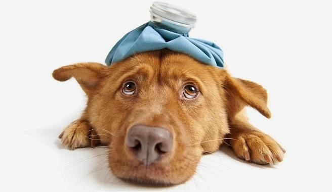 Resultado de imagen para como reconocer un animal enfermo
