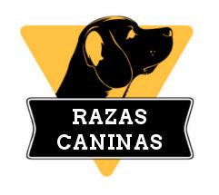 Razas Caninas - Descubre todas las razas de perro