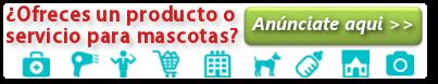Anúnciate gratis en mi perro es único